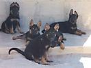 Cachorros de Rex_9