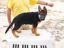 Rex y sus cachorros_1