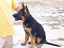 Rex y sus cachorros_2