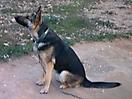 Rex y sus cachorros_3