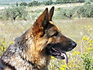 Rex y sus cachorros_8